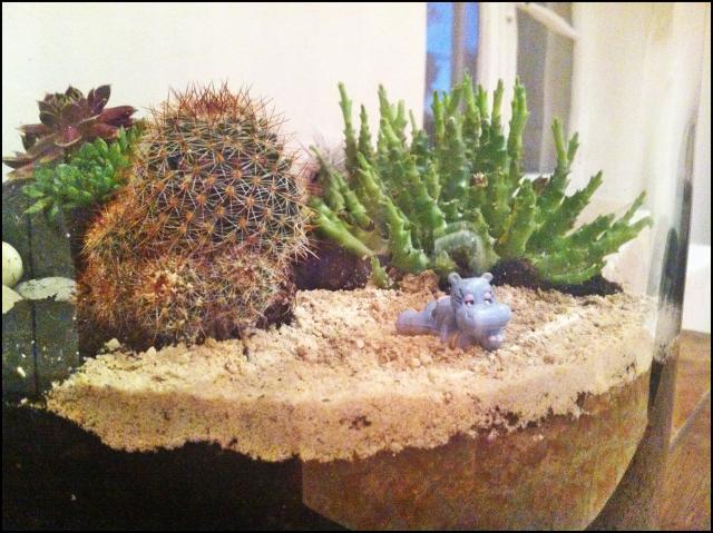 Terrarium Cactus et succulentes